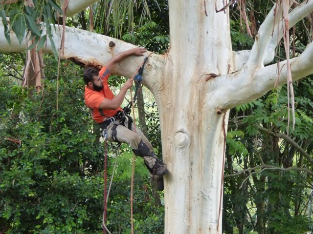 Tree Maintenance Vs Tree Lopping